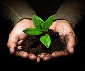 Hands-Holding-Soil-and-Seedling-Medium